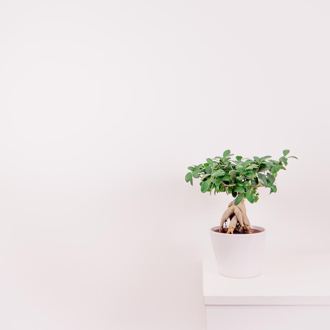 KIJO - Simple Solutions